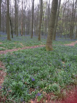 Woodland-walks-near-Milton-Keynes